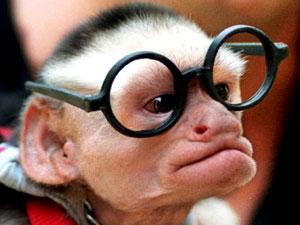 photo de singe humour