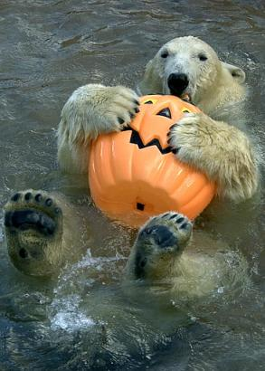 drole halloween