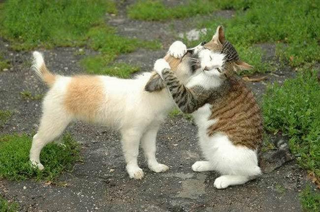 Même les animaux savent aimer mais toi Sid Ali tu ne sais pas c'est quoi l'amour dans Liens amour-fou
