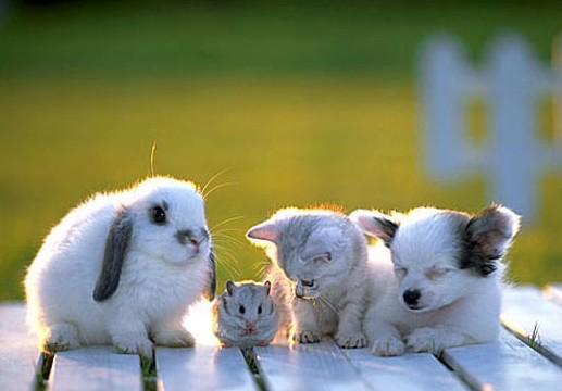 De petits animaux