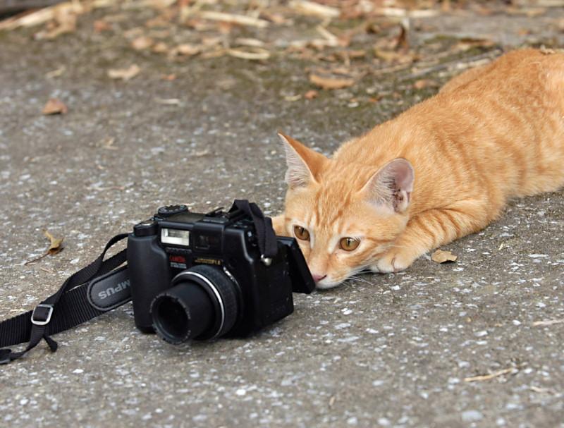 camera-drole