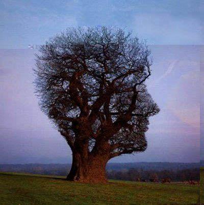 arbre-bizarre1.jpg
