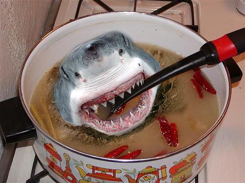 Au plaisir de vous lire ici - Page 3 Soupe-requin
