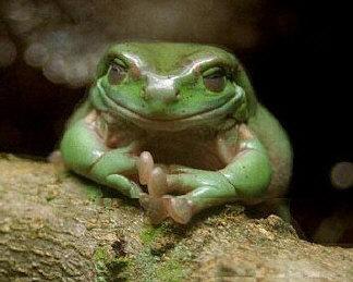 droles-grenouilles.jpg