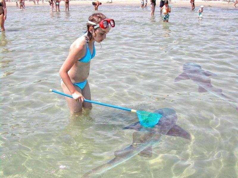 p�che requin