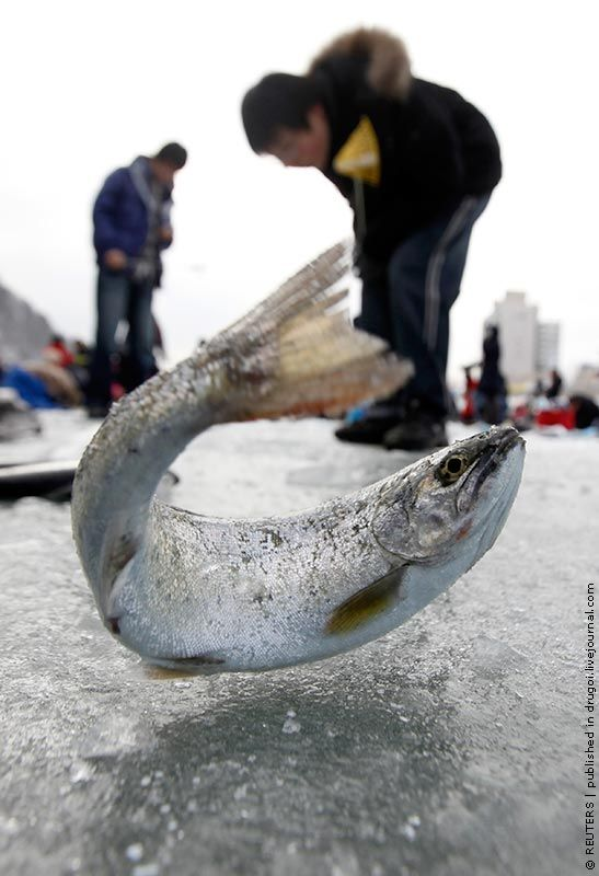 tournoi pêche glace