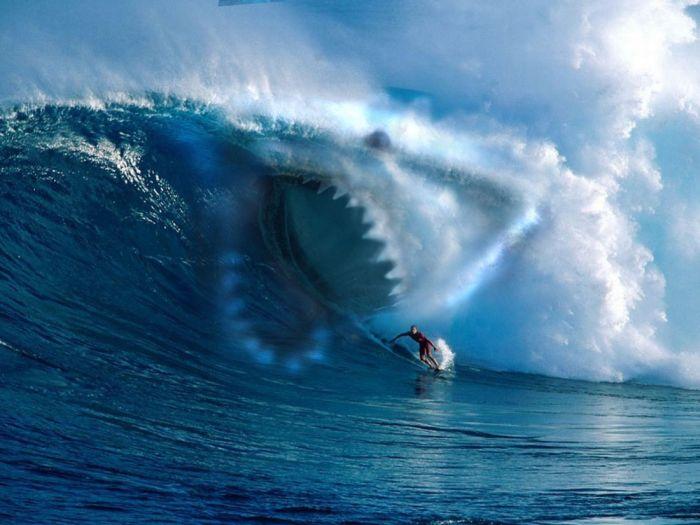 Surf et requin
