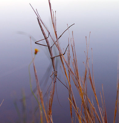 Insecte bizarre