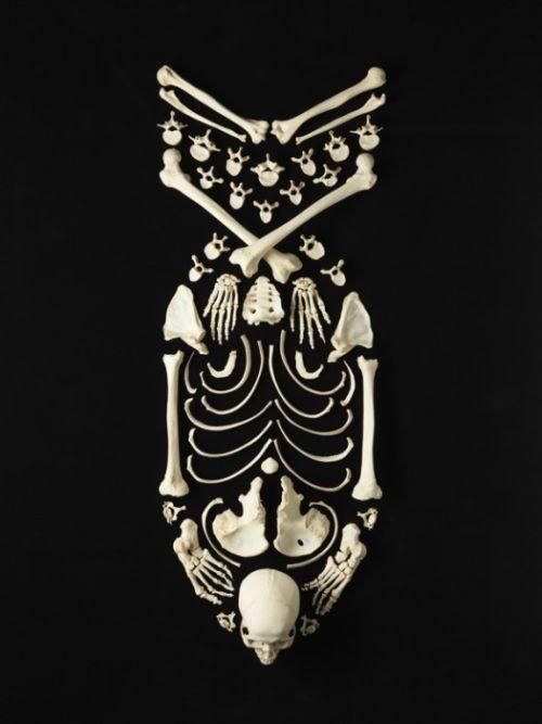 os de squelette humain