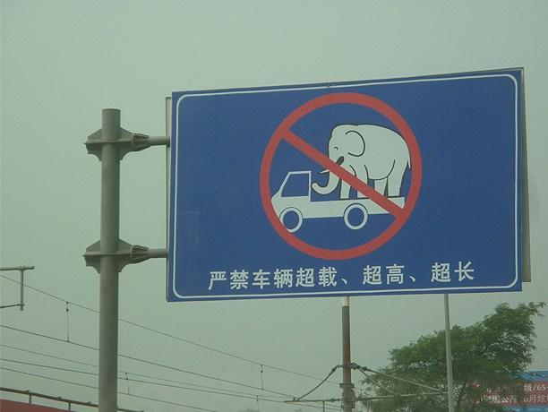 transport-elephants.jpg