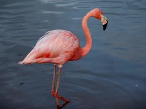 Oiseau du Mexique