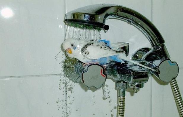 Laver oiseau