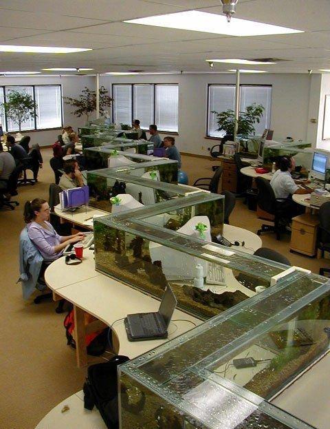 Aquarium bureau