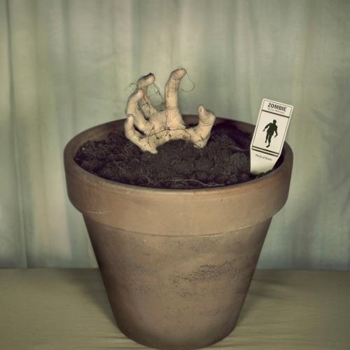 Plante Zombie