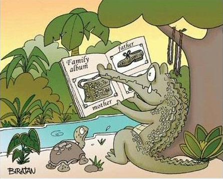 Crocodiles... Alligators ...etc Crocodilles