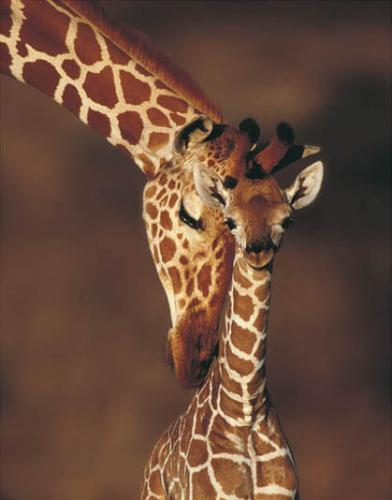 TOPICAFLOOD MIGNON  - Page 2 Bebe-girafe