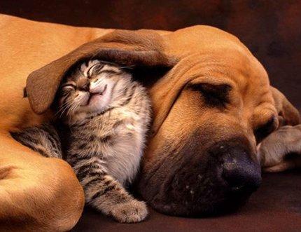 oreille chien