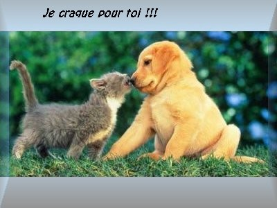 amour_chat​_chien