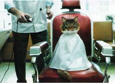 chat_coiffeur