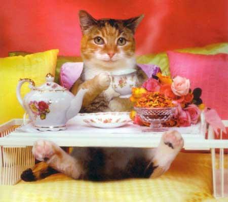 chat_dejeuner_lit