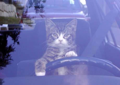 chat_voiture