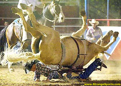 Photos gags d'animaux! Rodeo