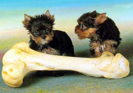 bebe-chiens-os