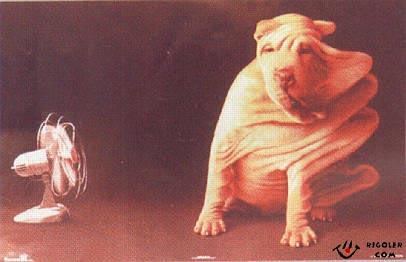 chien-ventilateur