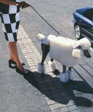 chien_caniche_rase