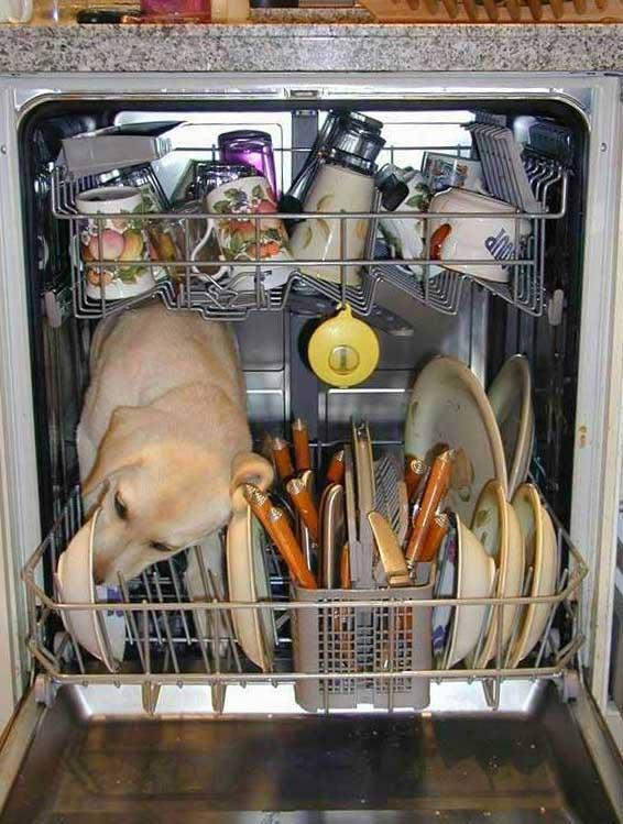 chien_lave_vaisselle
