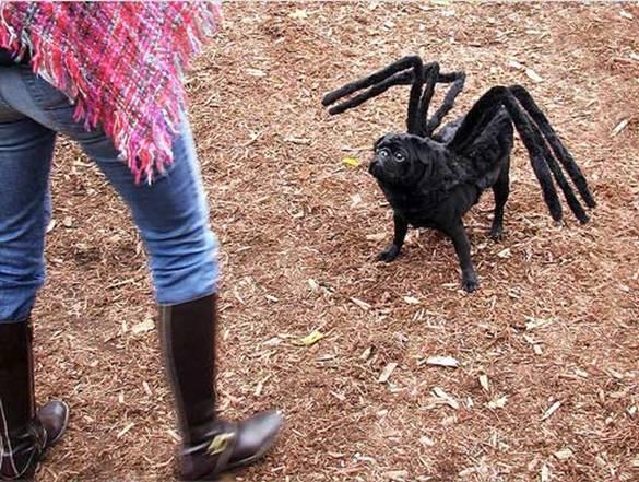 chien-araignée