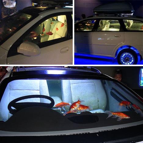 Aquarium voiture