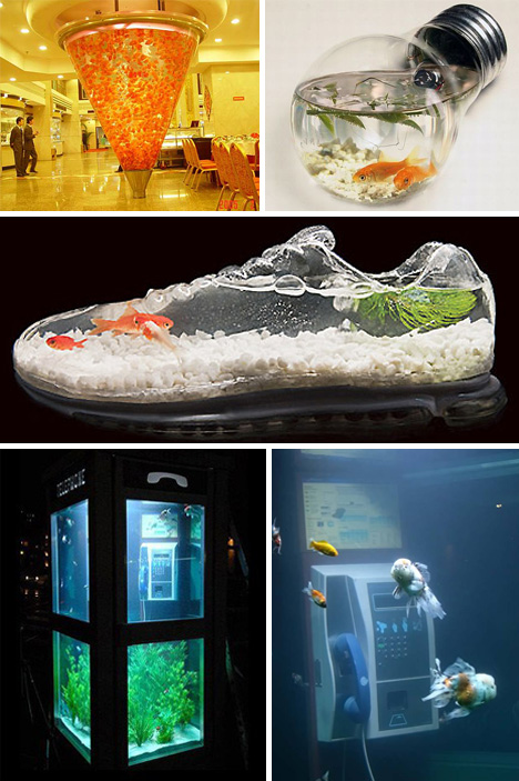 Dr�les d'aquariums!