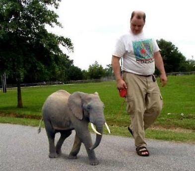mini-elephant.jpg