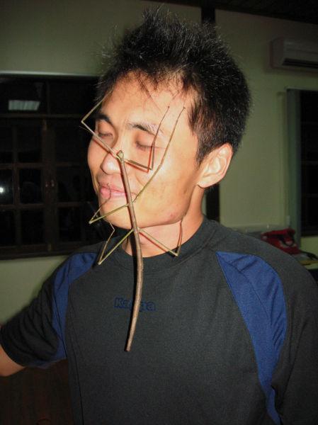 insecte-face.jpg