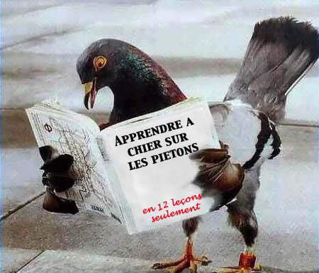 The love boat - Chapitre 1 - Le grand départ dans Les chroniques d'Edouard drole-pigeon