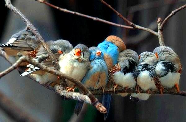 Photo d'une famille d'oiseaux