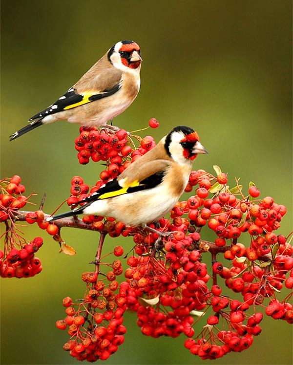 عصافير منازلها الرائعة