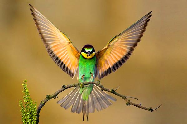 عالم الطيور - عصافير في أزهى ألوانها