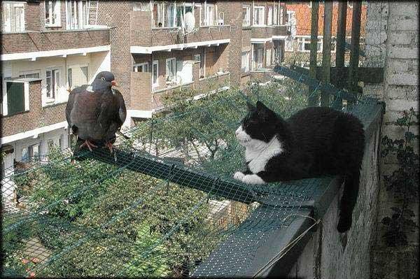 drôle de pigeon