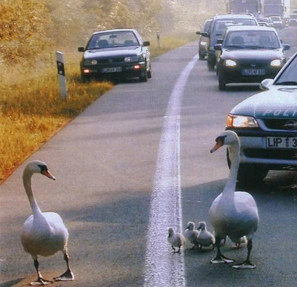 oiseaux dans la rue