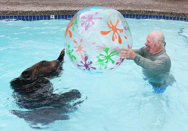 La taverne des zumoristes la taverne for Petit ours brun a la piscine