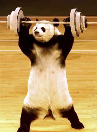 panda-haltere