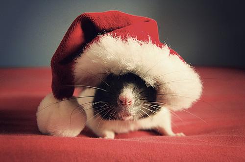 [Image: rat-noel.jpg]