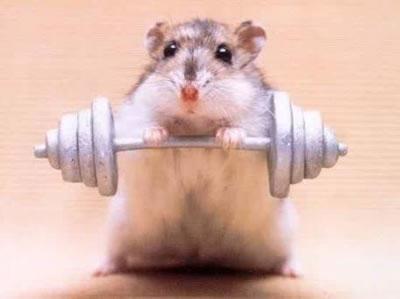 hamster-sport
