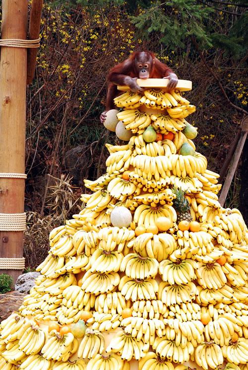 http://www.villiard.com/images/animaux/singes/singe-heureux/singe.jpg