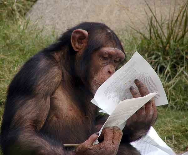 http://www.villiard.com/images/animaux/singes/singe-intelligent.jpg