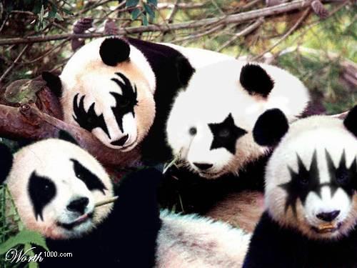 Des photos d 39 animaux dr les humour et plaisir rire gag - Videos droles d animaux ...