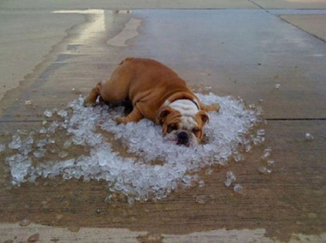 chien glace