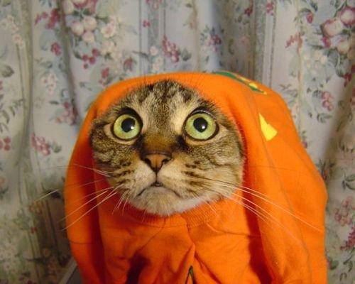 chat-deguisement